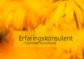Erfaringskonsulent i Trondheim kommune
